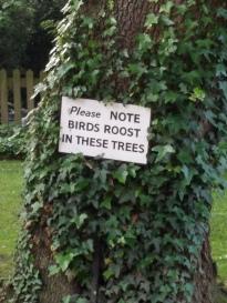 birdsroostinthesetrees