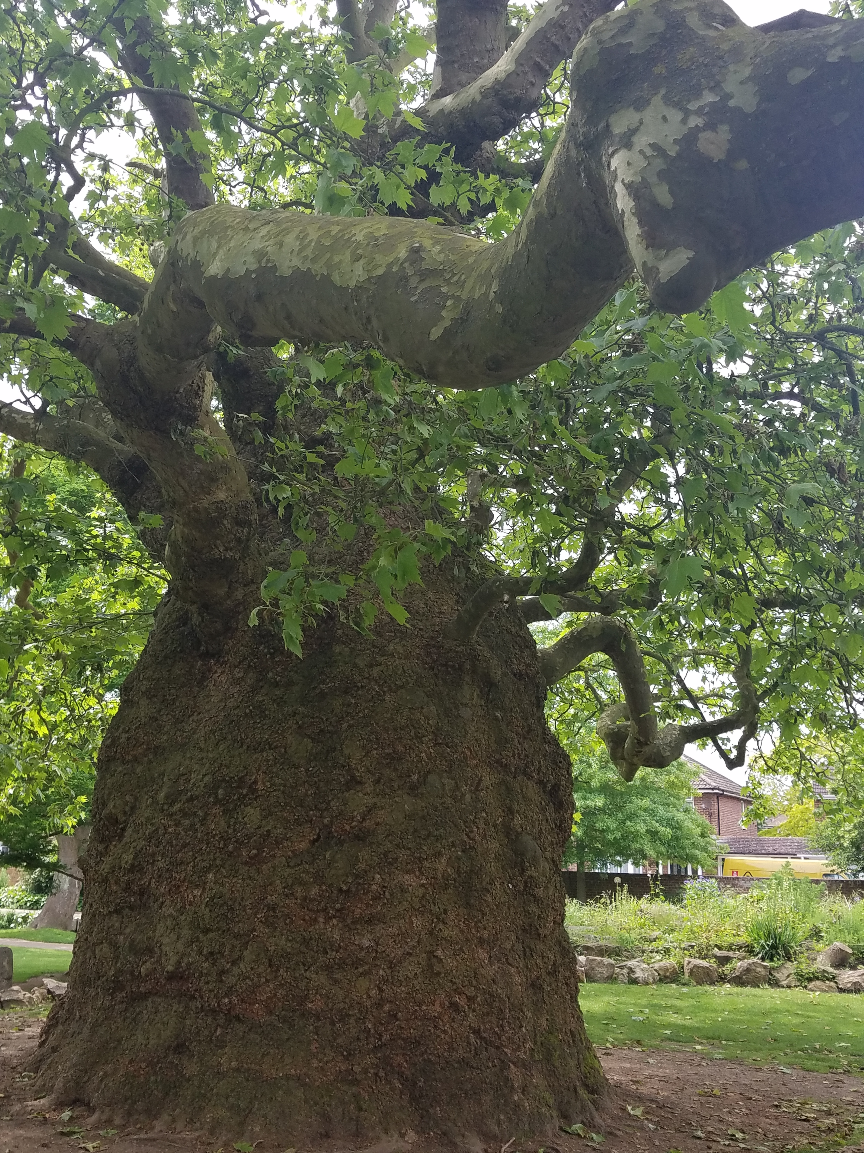 canterburytree