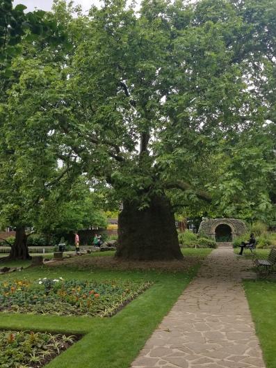 meetingthecanterburytree.jpg